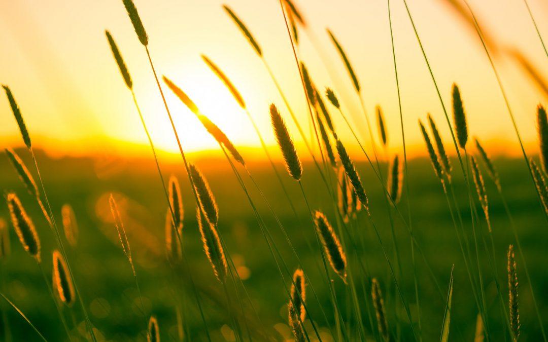 Fresh interpretations of Vivaldi's 'Summer'